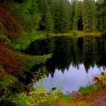 Лесное озеро